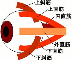 外眼筋トレーニング